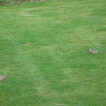 Rabbits are Rampant at Stirling U