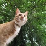 Glory Cat