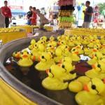 Ducks at the MN State Fair