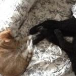Ginger Comforts Ailing Atticus