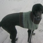 Atticus Poses in Sweater 2008