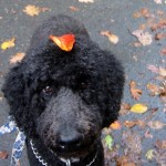 Atticus wears a leaf hat in NJ