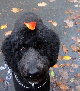 Atticus wears a leaf hat in NJ, 2012