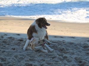 Rusty & Pippa