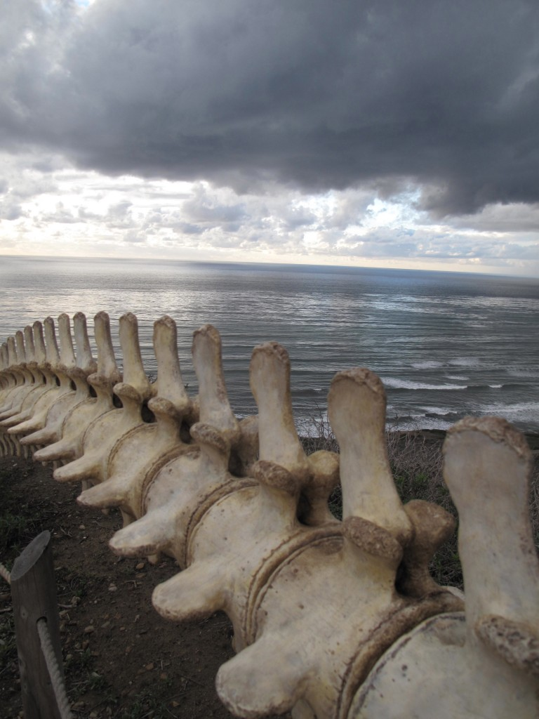 Whale Bones at Point Loma