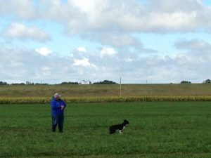 Sheep Dog Trials at Wisconsin Sheep & Wool